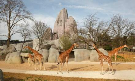 Parc  Zoologique  de  Paris ( Zoo de Vincennes )