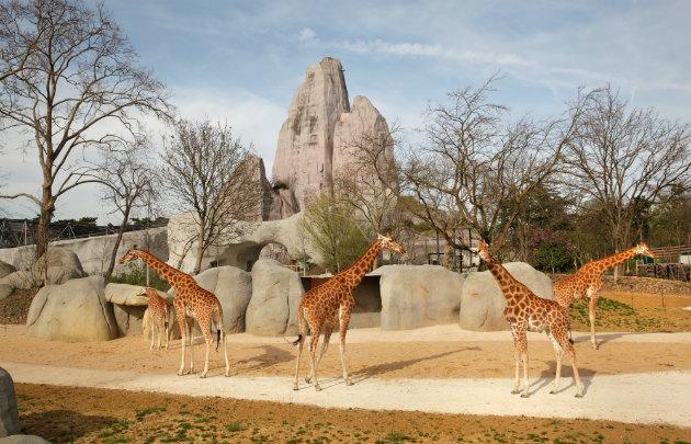 Parc  Zoologique  de  Paris ( Zoo de Vincennes )